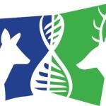 logo projektowe
